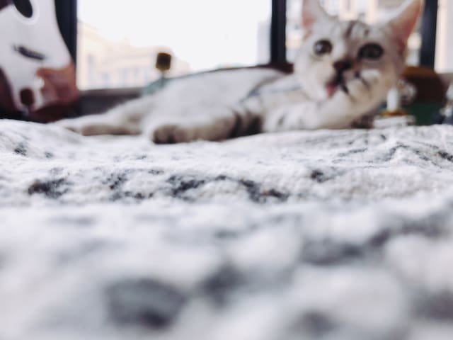 东二环泰禾广场,撸狗吸猫+激光电视+Switch+硬核厨房+乳胶床+洗烘机,独眠次卧(单人间)