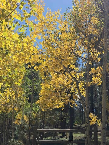Entrance to property with the beautiful fall Aspen leaves!