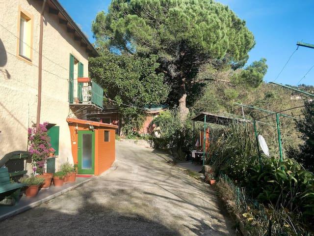 Il borgo delle Mimose (FLG352)