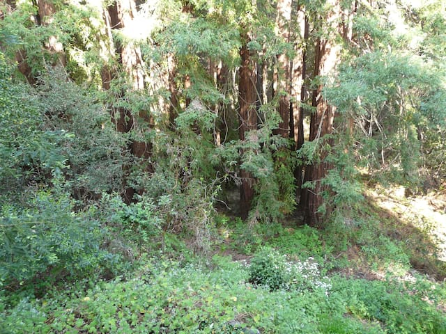 Below the cabin is a Redwood Grove waiting for you to enjoy!
