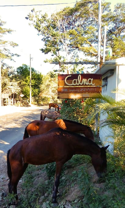 Everybody is welcome to Calma!
