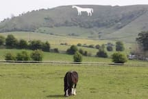 The Westbury white horse although we call it the Bratton white horse as it is within ancient borders. Scene of the battle of Ethendun when King Alfred fought of the Vikings who had hold of the rest of the kingdom and also burnt some cakes. Allegedly.