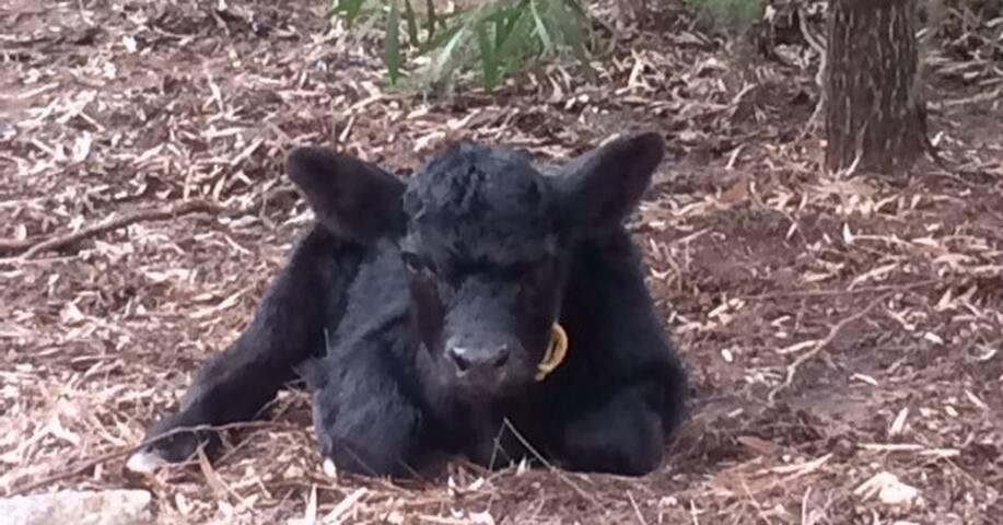 Rural retreat - cows included! - Dignams Creek