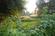 Et à l'arrière notre jardin nature
