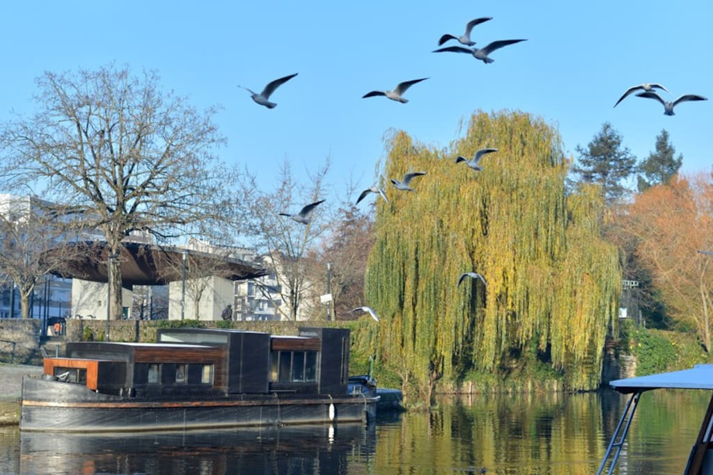 Péniche contemporaine centre ville - Boats for Rent in Nantes ...