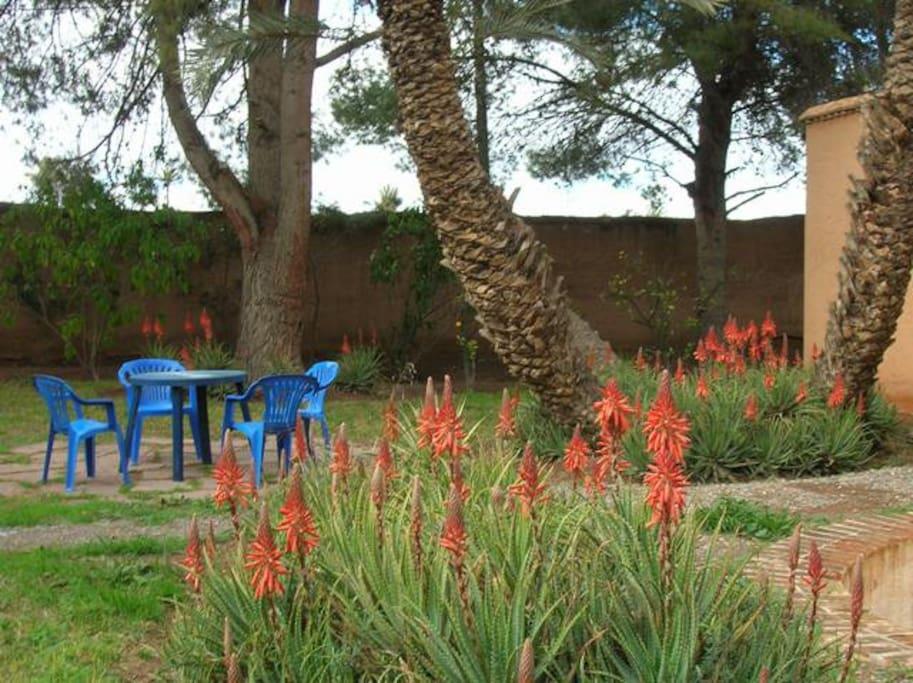 Un jardin ombragé, de belles plantes, un mimosa triomphant (à la belle saison)