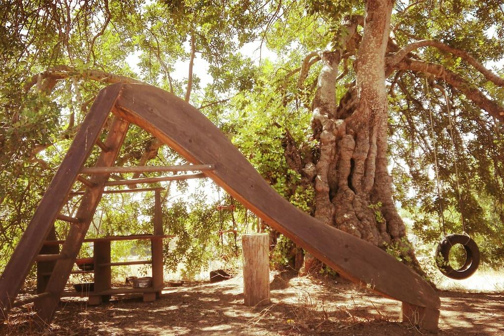 Playground tree