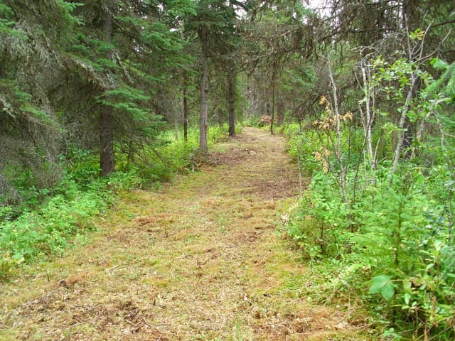 One of the numerous Chickadee Acre trails