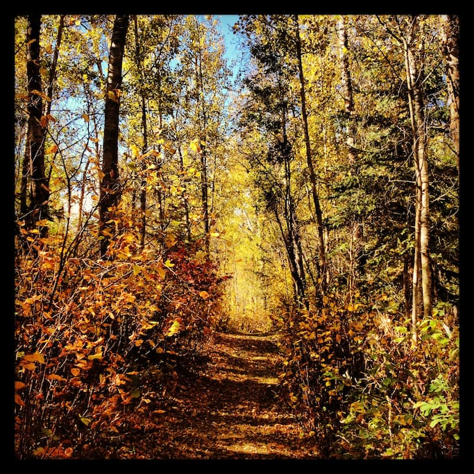 Kilometres of recreational trails through the forests provide year round enjoyment.  Nothing beats a walk in the woods on a warm autumn day.
