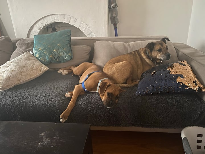 Dog lover spare room close to Newtown & airport