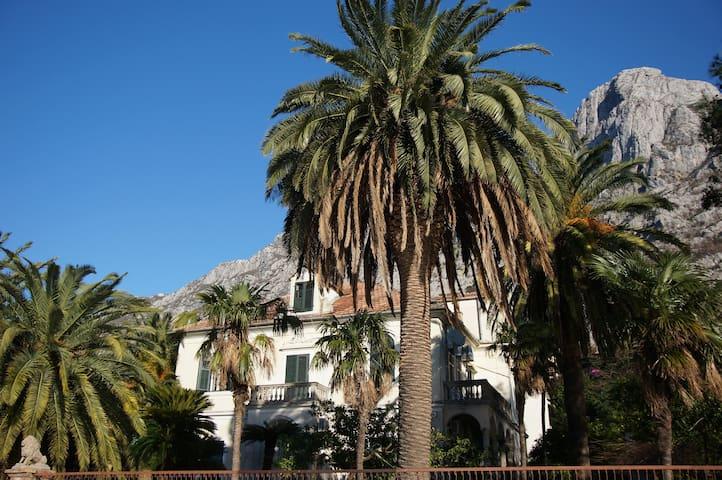 Palace, tropical garden and beach - Dobrota - House