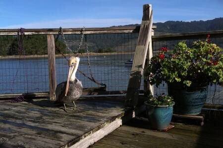Magical cottage  on Bolinas Lagoon