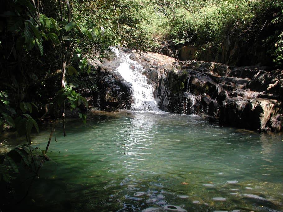 You can swim at the refreshing  rivers near the farm - Puede bañarse en los rios cercanos a la finca