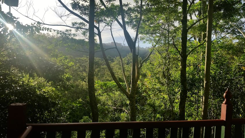 Rainforest Retreat atop a Glorious Mountain - Mount Glorious - Rumah Tamu