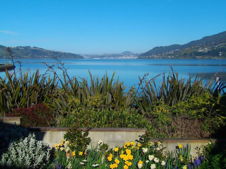 Arts Content Harbour View, Otago Peninsula