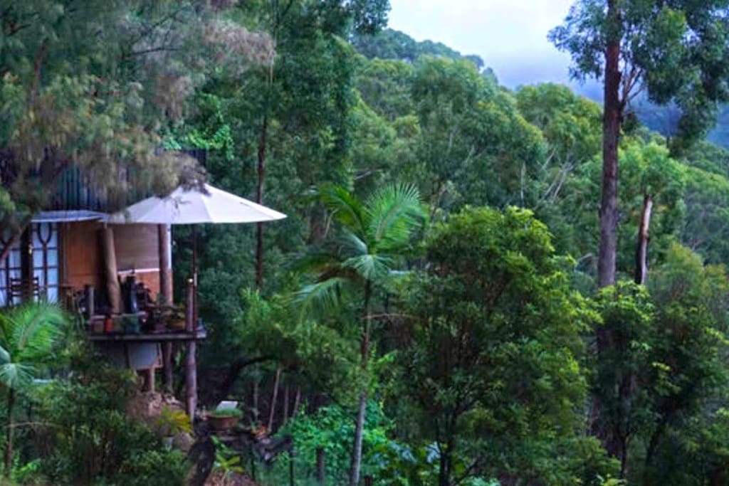 Immerse yourself in the middle of the jungle