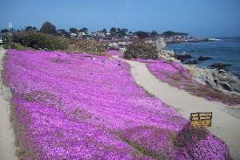 Home Like Stay Near Monterey