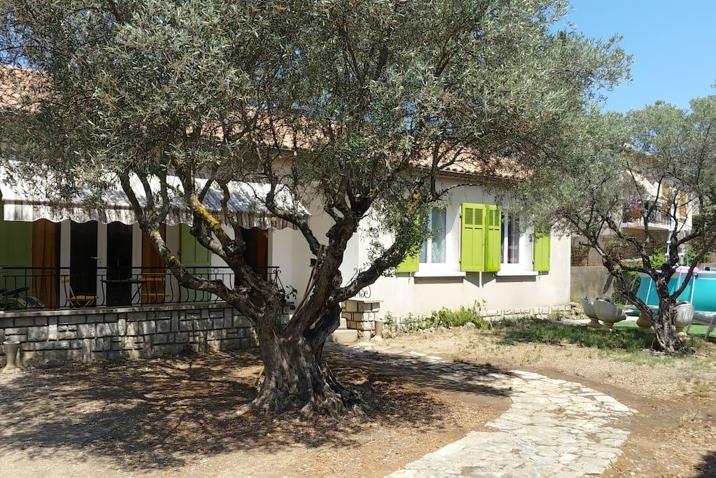 A l'ombre des oliviers centenaires