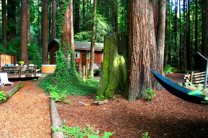 OtterCreekRomantic! HotTub,Magical! - Cazadero - House