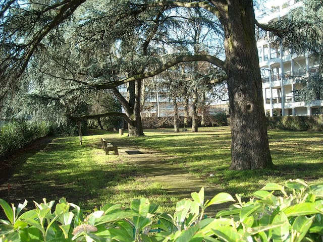 A quiet park with the shade of old cedars