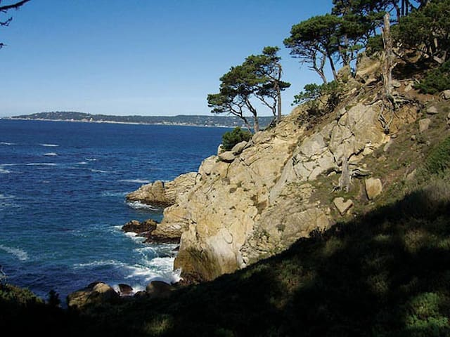 The Point Lobos