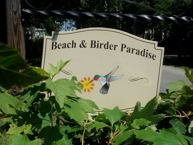 Beach and Birder Paradise