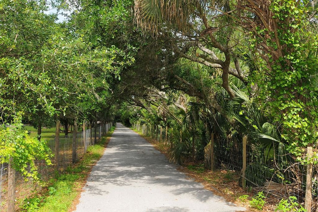 """Beautiful Covered Driveway Leads you To the (2) 2 Bedroom """"Tree House"""" Apartment Units"""