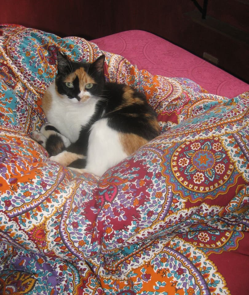 Elektra...wondering why I want to make the bed!