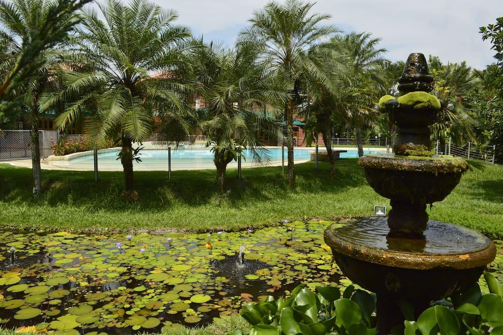 Pond and Lotus plants