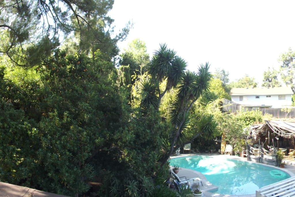 Paradise! Pines, Tropics, Fabulous!