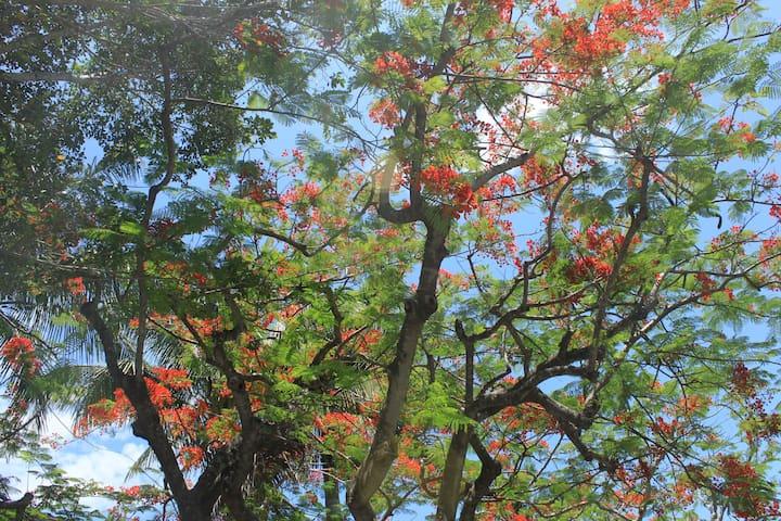 Treehouse at Vanderbilt Beach - Live within Trees - Naples