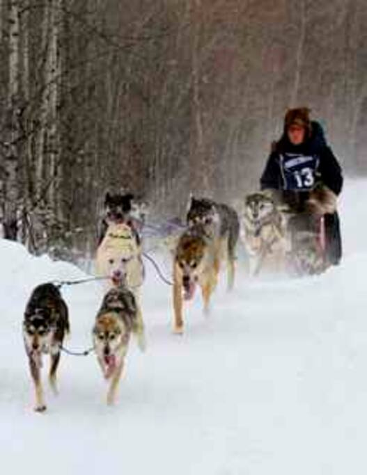 Many dog mushing events and opportunities in the area.