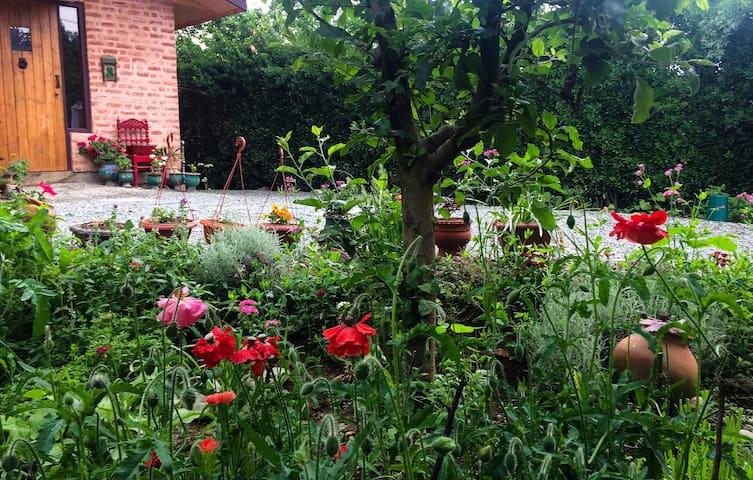 Naivasha - a tranquil orchard studio near Dal Lake