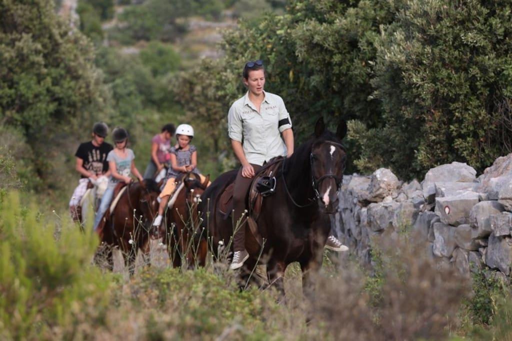 KOJAN KORAL / HORSE BACK RIDING
