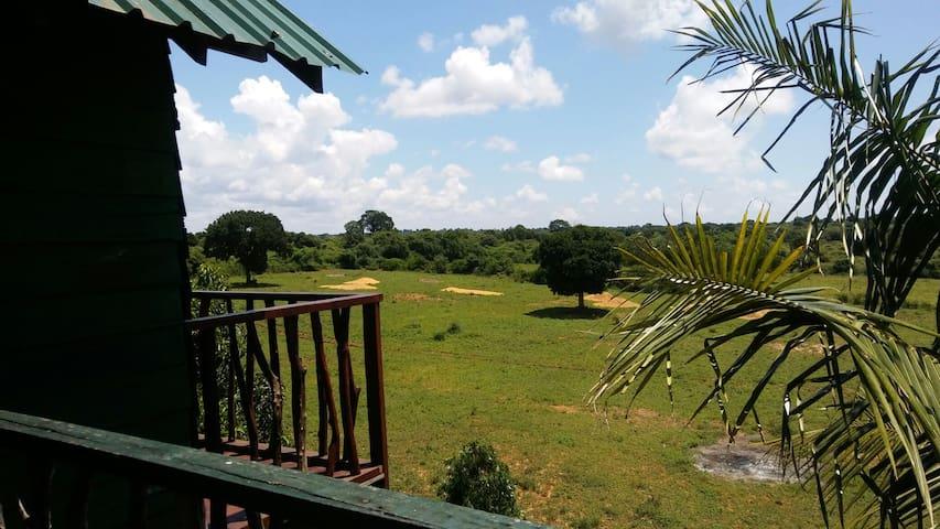 Safari Tree House. - tissamaharama.yala. - Boomhut