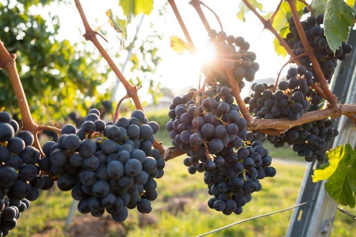 County Vineyard Estate Suite