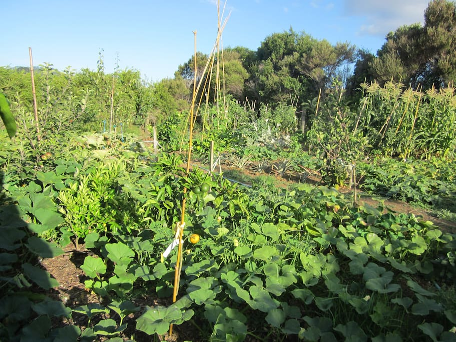Help yourself to the garden and orchard.