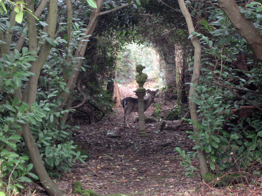 Deer are regular guests. Your own woodland walk