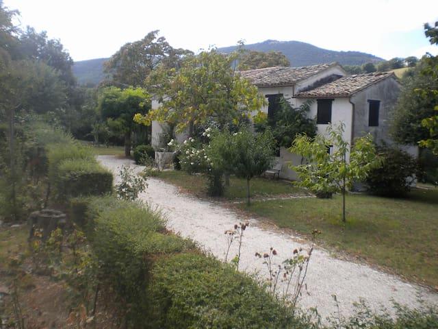 Casa colonica indipen. con giardino - Treia - Casa