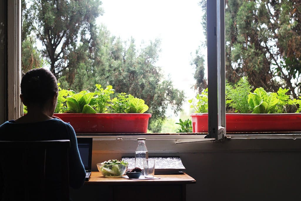 A typical calm scene in our house: quiet work, and food grows on the windowsills.