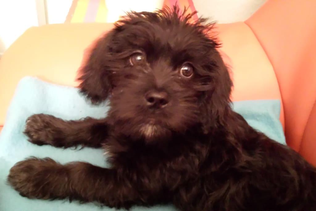 Charly unser Hund
