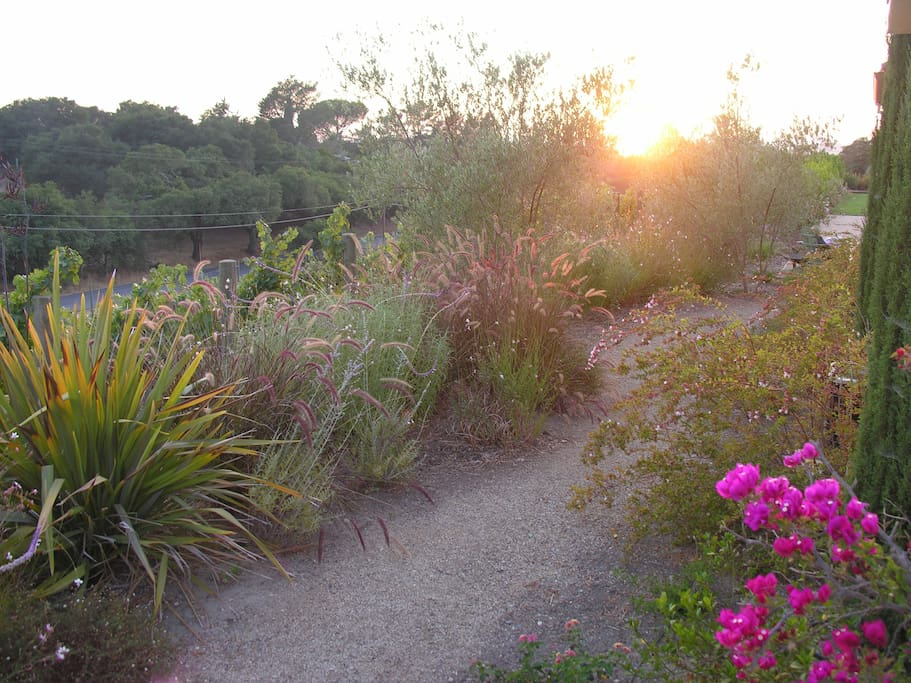 Garden path below guest suite bacony