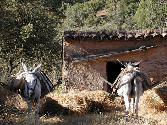 casa en Calabazares - Calabazares - House
