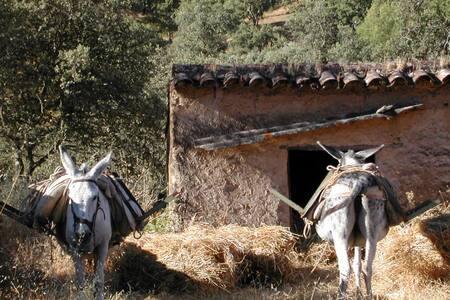 casa en Calabazares - Calabazares