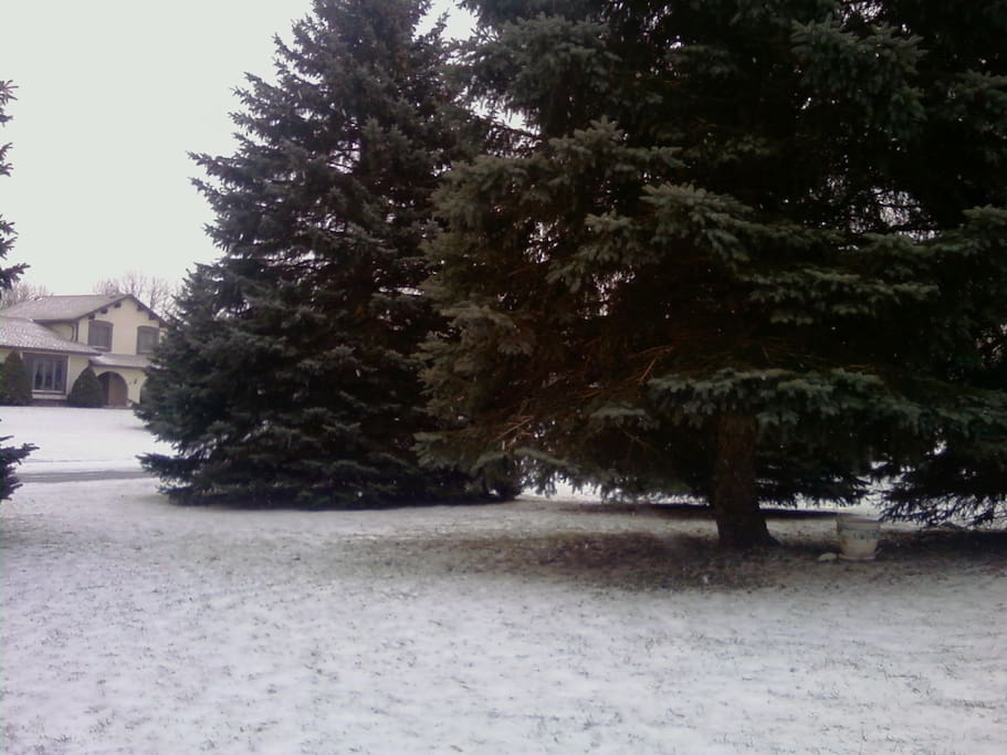 Front Yard after the Snow