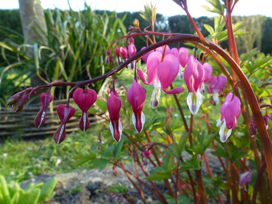 Les parterres fleuris décorent l'extérieur où vous pourrez bénéficiez du salon de jardin.