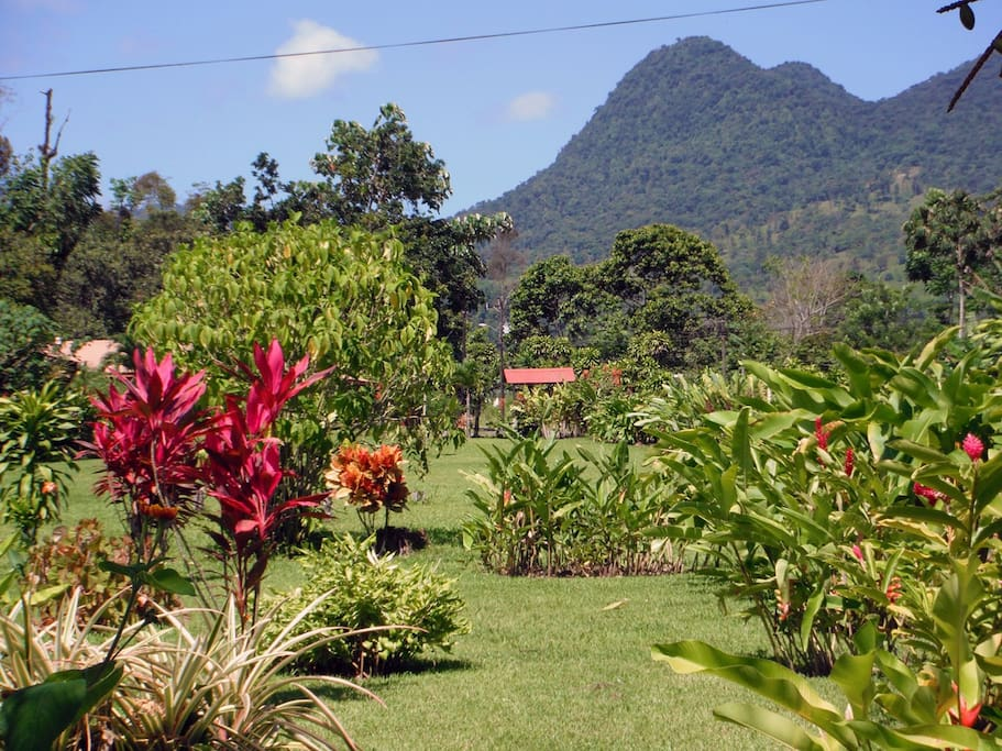 View of Cerro Chatto and tropical Gardens