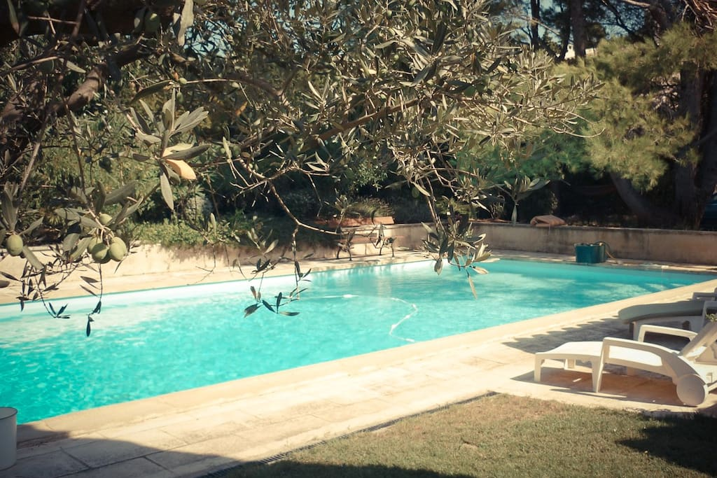 Olive trees by the pool