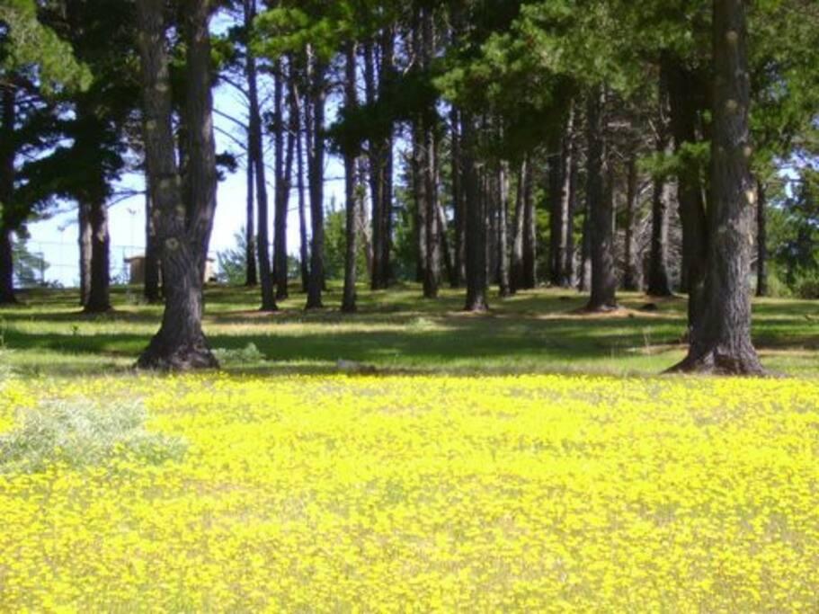 bosque costado Depto. en Primavera