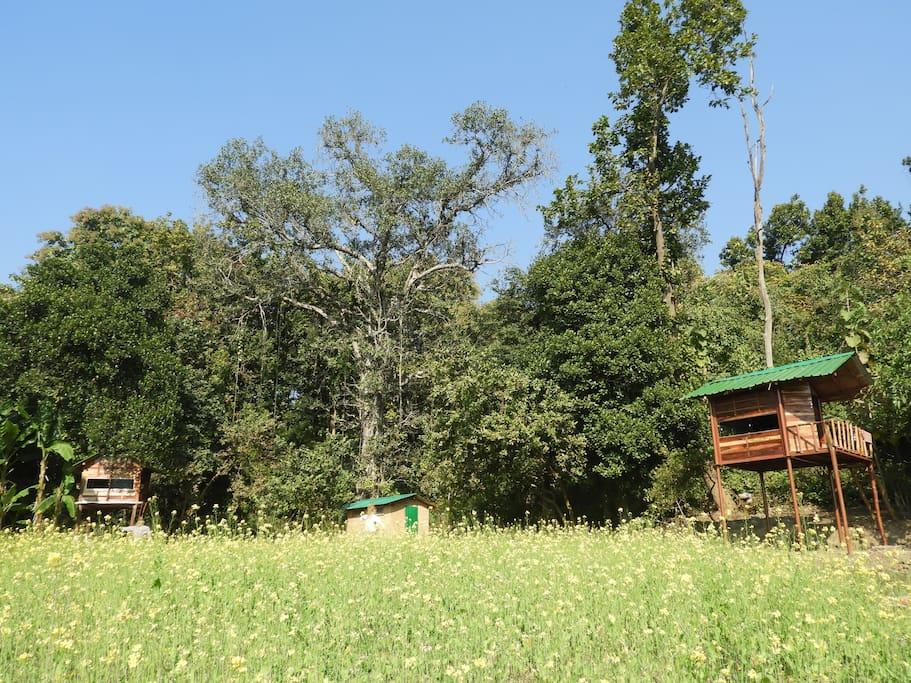 Machan amongst the farm